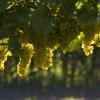 Tipos de Denominaciones de Origen del Vino